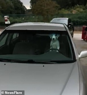 WATCH: Impatient Dog Lays On Owners Car Horn