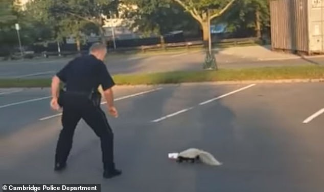 Cop Helps Free a Skunk with its Head Stuck in a Yogurt Cup, Gets a Smelly Thank You