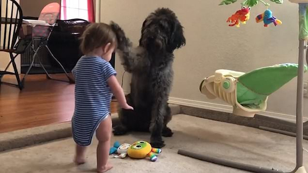 Dog Teaches Toddler How to Sit