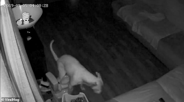 WATCH: Dog Uses Owner's Kid's Training Toilet In The Middle Of The Night