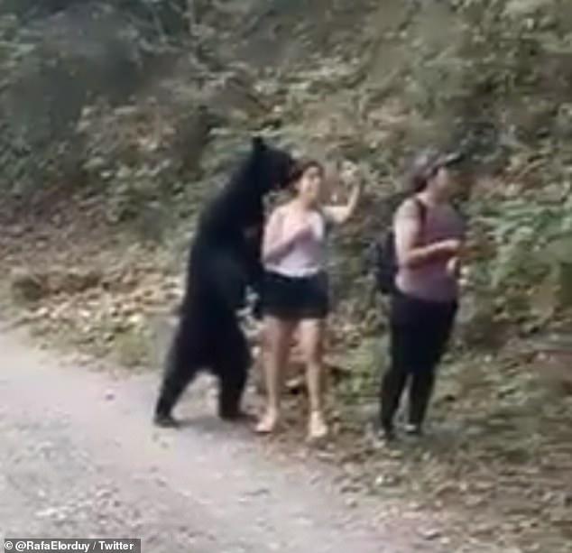WATCH: Woman Snaps Selfie With Black Bear