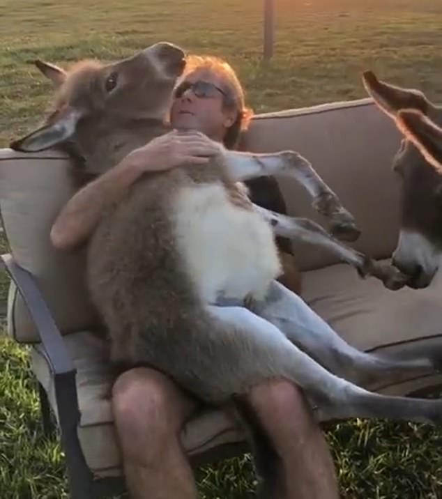 WATCH: Farmer Sings 'You Are My Sunshine' to a Donkey as He Rocks Her to Sleep