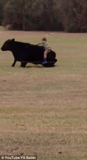 Young Boy Jumps On The Back Of A Cow For A $20 Bet With His Dad......But It Ends Badly