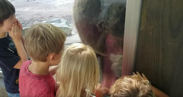 Bear Poops Right in Front of Kids at a Zoo