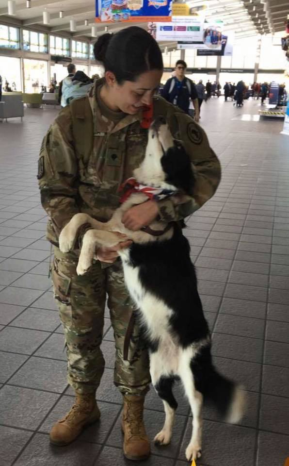 WATCH: Dog Cannot Control Her Excitement When Solider Comes Home