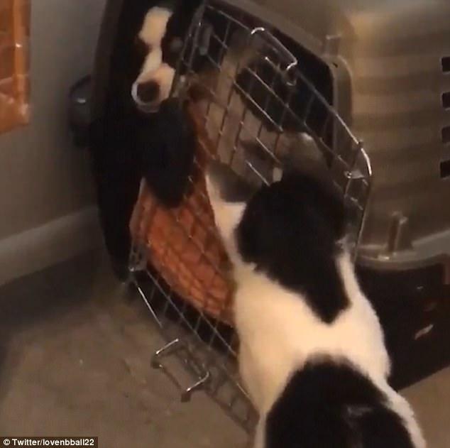 WATCH: Cat Breaks Out 2 Misbehaving Dogs