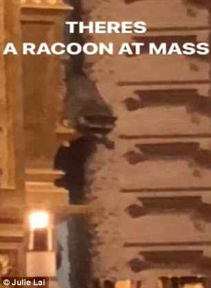 WATCH: Raccoon Joins A Church Service