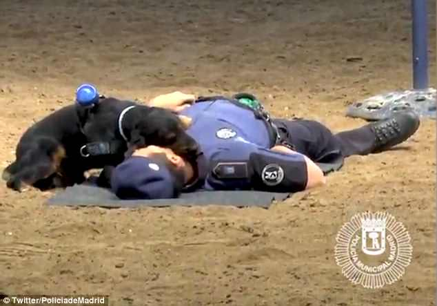 WATCH: Police Dog Performs CPR On Cop