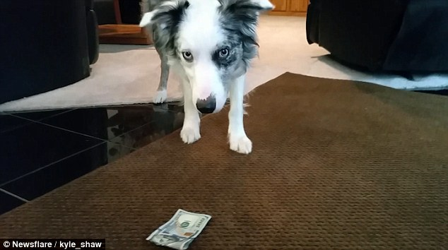 WATCH: Husband Gets His Dog To Swipe $100 From His Wife