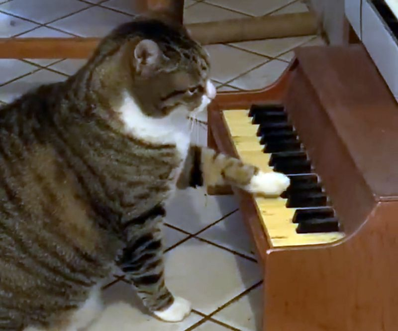 WATCH: Cat Plays Piano To Ask For Food and Litterbox Changes