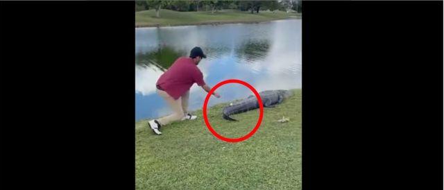 WATCH: Man Retrieves Golf Ball Off of an Alligator