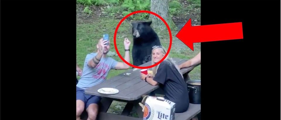 WATCH: Family Feeds Bear Peanut Butter Jelly At Their Picinic