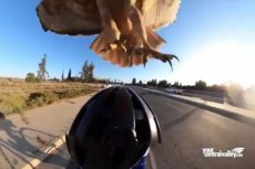 WATCH: Cyclist Dive-Bombed by Hawk