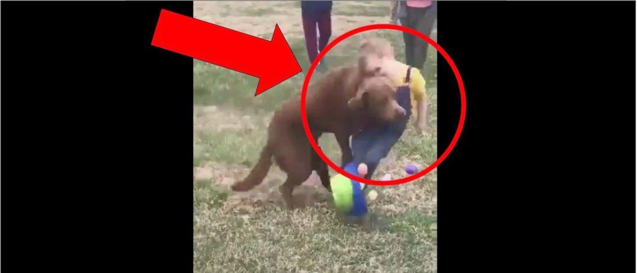 WATCH: Dog Annihilates Little Kid During Easter Egg Hunt