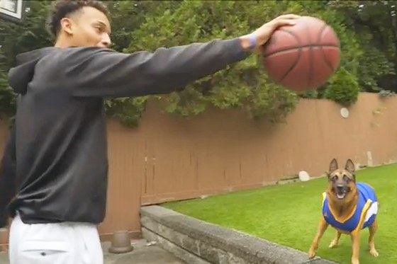 This Dog Sets Up An Alley Oop!