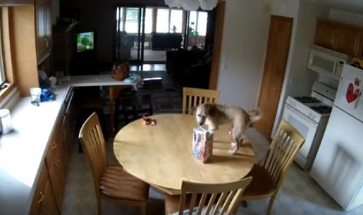Nest Cam Spots Hungry Dog