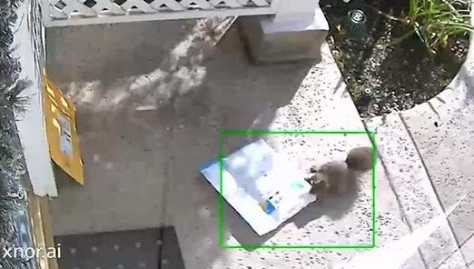 WATCH: Squirrel Caught On Camera Stealing A Package