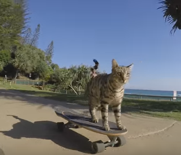 This Cat Skateboards Better Than You