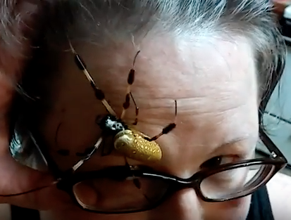 WATCH: Woman Lets a Huge Spider Crawl on her Face