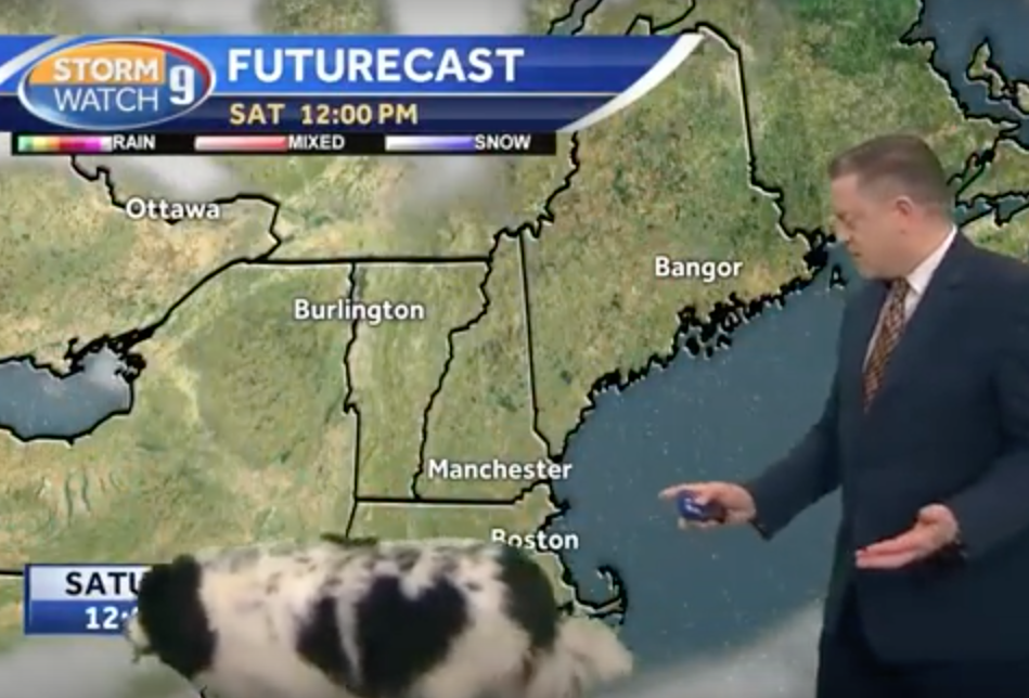 A Dog Interrupts a Weather Forecast