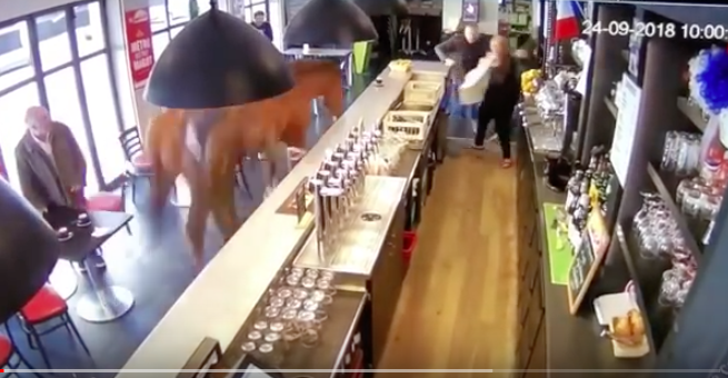 So, a Horse Walks Into a Bar...