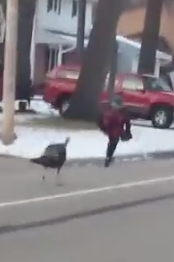 WATCH: Kid Runs For His Life After Being Chased By A Turkey