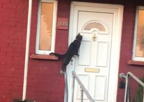 Cat Uses Knocker to Get Someone to Answer the Door