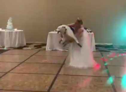 Bride Does Her First Dance with... a Collie?