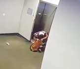 WATCH: Man Saves Dog's Life After Its Leash Got Caught In A Closing Elevator Door