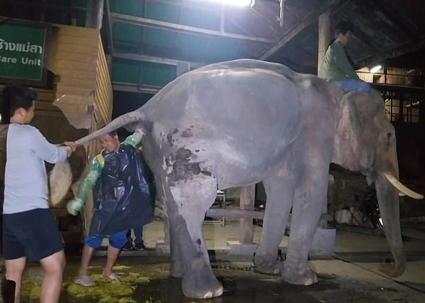 You Thought Your Job was Bad? This Guy has to Deal with a Constipated Elephant