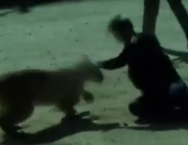 WATCH: Police Officer Fights Off Mountain Lion With Her Bare Hands