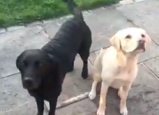 WATCH: 'Bored' Sports Broadcaster Posts Play-By-Play Video of His Dogs Eating