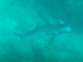 WATCH: Shark Bites Spearfishermen in the Back of the Head
