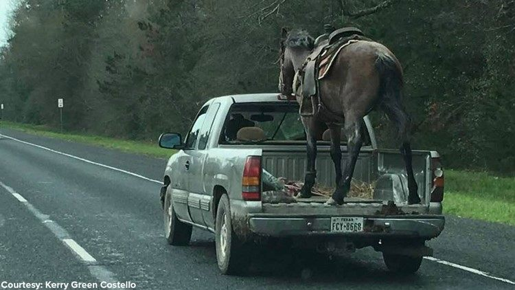 A Horse in the Bed of a Pick-Up Truck… on the Highway
