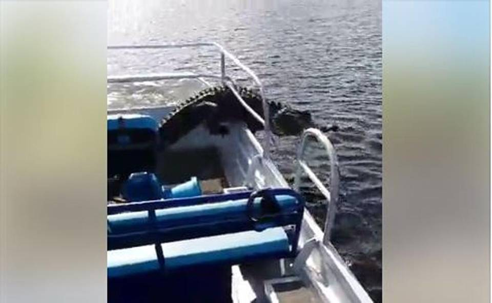 Florida Tourists Freak When Big Alligator Jumps Into Boat