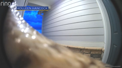 Snake Caught On Doorbell Security Video