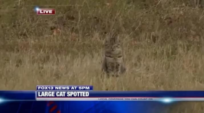 Local News TV Segment About Panther-Sighting is Going Viral